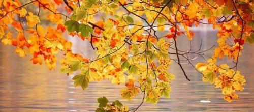 Есен е…Време за преход. Аюрведа съвети.